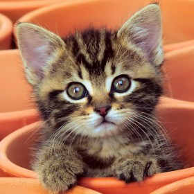baby-kitten-cat-curious-kitten-cute-Favim.com-278562