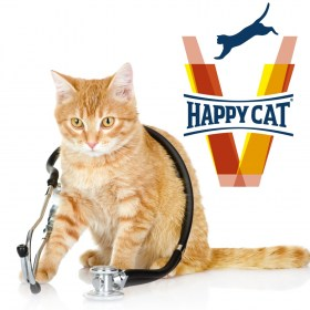vet happy cat