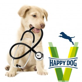vet happy dog